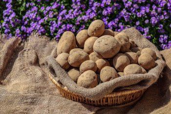 Dieses Bild zeigt einen Korb mit Kartoffeln.